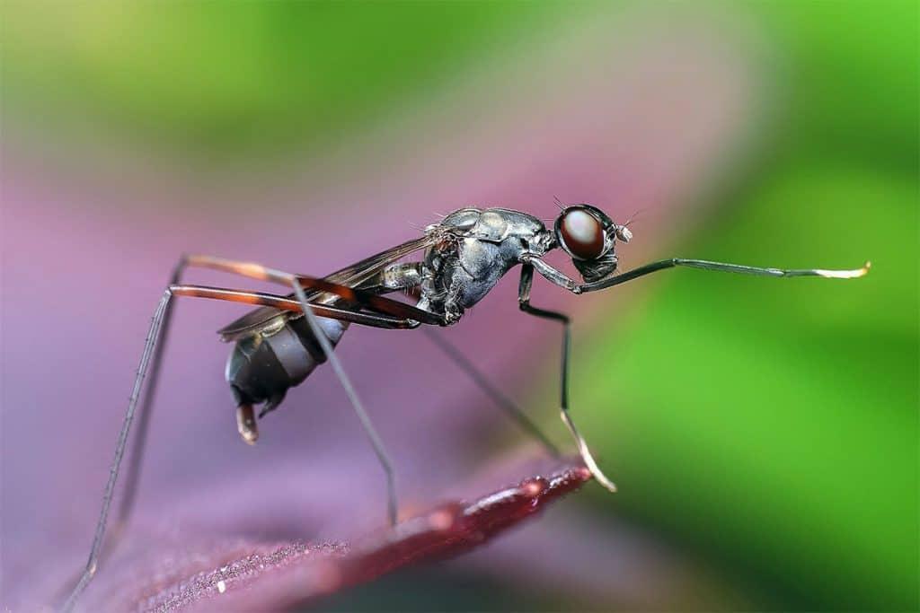 ant walking on a leaf