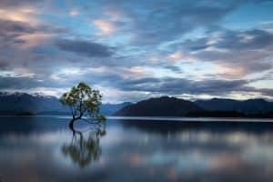 tree on a lake